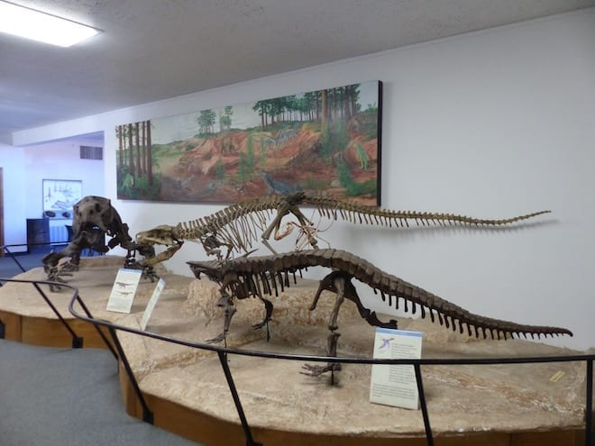 USA mit Kind - Petrified Forest - Museum - Dinosaurierskelette