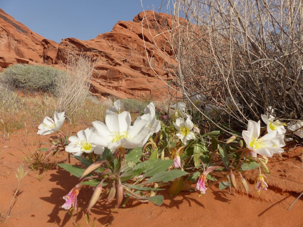 Valley of Fire - USA mit Kind alleine 6