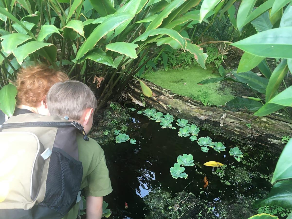 Botanischer Garten Berlin mit Kindern - Tropenhaus