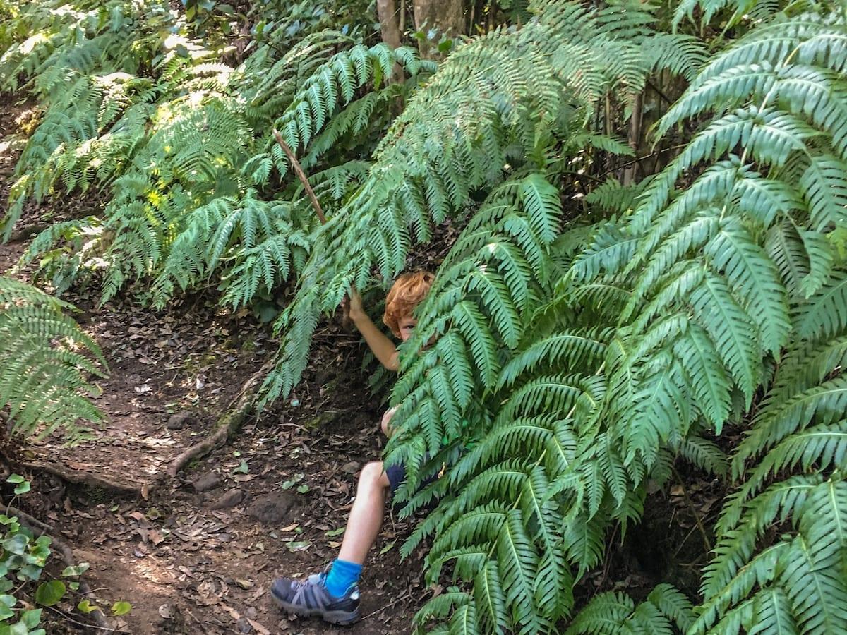 Wandern auf Teneriffa mit Kindern - Farne im Anaga GEbirge