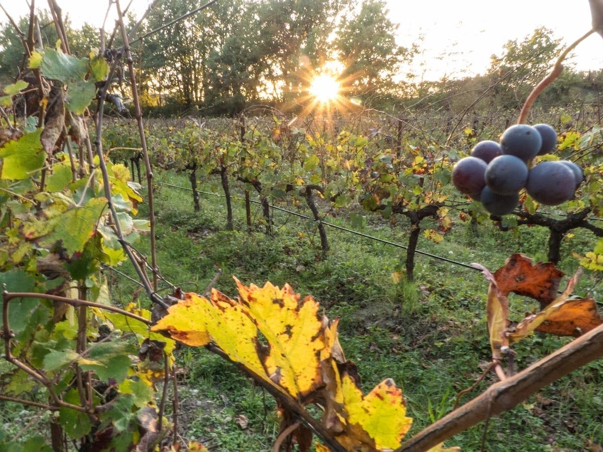 Mit dem Campervan durch Südfrankreich im Herbst - Weinberge