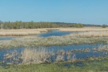 Wasserlandschaft im Nationalpark Unteres Odertal